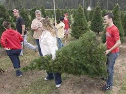 Cutting Christmas Tree - where to cut your own christmas tree in the houston area houston