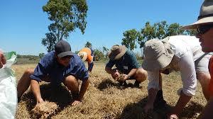 fertiliser for native plants nq farmers brew own biofertiliser queensland country life