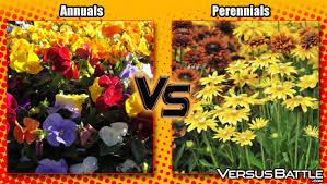 privacy fence vs privacy hedge versusbattle com
