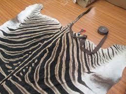rug master zebra hide zebrahide zebra skin cleaning and repair