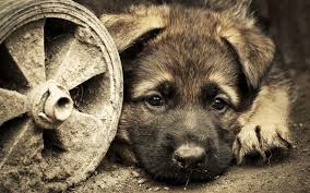loving2you cute puppies and dogs images