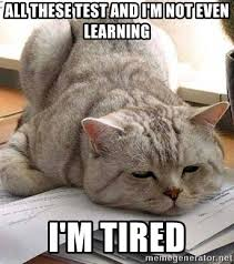 Tired Cat Meme - i m tired cat meme best tire 2018