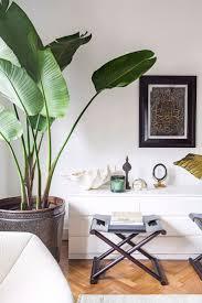 best 25 indoor floor plants ideas on pinterest living room