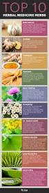 benefits of native plants herbal medicine u0026 the top 10 herbal medicine herbs dr axe
