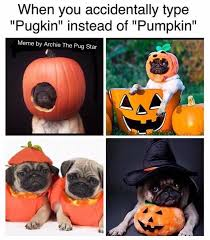 memes de halloween ya homeboy napoleon and other small doggos home facebook