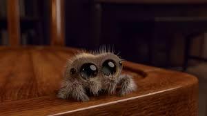 Sad Spider Meme - lucas the spider youtube