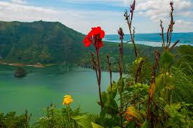 volcano flowers taal volcano and flowers in tagaytay philippines stock image