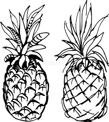pineapple vector illustration stock vector image 65053611