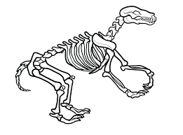 realistic dinosaur bones coloring pages