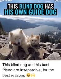 Blind Dog And His Guide Dog 25 Best Memes About Blind Dog Blind Dog Memes
