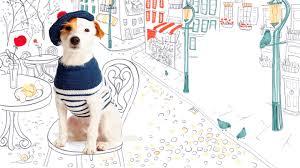 dapper dogs 5 questions for pet knitwear designer debbie bliss