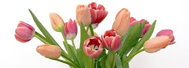 Images Of Tulip Flowers - tulip bouquet free pictures on pixabay