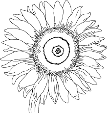 sunflower coloring page free download clip art free clip art