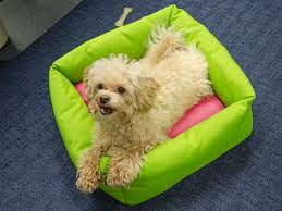 How To Make A Dog Bed How To Make A Dog Bed Video Sailrite