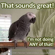 Funny Bird Memes - the absolutely best bird memes ever