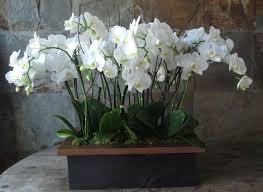 Indoor Plant Arrangements 11 Best Indoor Plants Images On Pinterest Indoor Plants Indoor