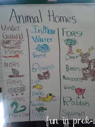 fun in prek 1 a picture palooza of animal homes u0026 life cycles