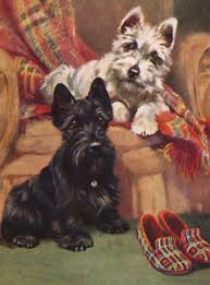 scottish terrier charming scottie westie and slippers