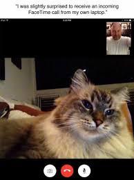 Cat Laptop Meme - funny cats