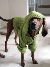 bluetick coonhound stuffed animal 65 best u2022coonhounds u2022 images on pinterest bluetick coonhound