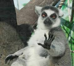 Blank Keep Calm Meme - keep calm and listen to the lemurs wisdom did you know