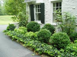 best bushes for front of house garden ideas