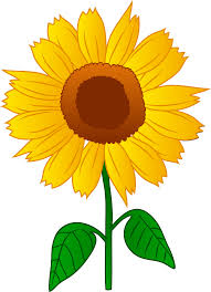 cartoon picture of sunf flower clipart library clip art library