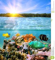 sunset and colorful underwater marine life stock photos image