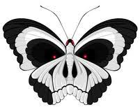 skull butterfly stock vector illustration of single 21331175