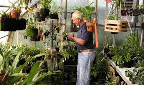 orchids care seasonal orchid care