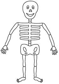 Halloween Drawing Activities Picture Of Skeleton For Kids Copy Only One Half And Use For
