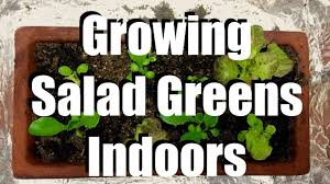 how to grow salad greens indoors u0026 2 easy indoor grow light set