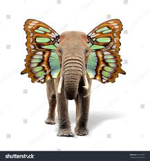 elephant butterfly wings isolated on stock photo 553155709