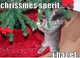 Funny Christmas Cat Memes - funny christmas cat memes christmas pinterest funny christmas