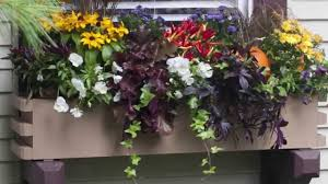 diy window flower boxes window boxes planting tips youtube