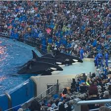 Sea World San Diego Map by Seaworld San Diego Hosts Final Killer Whale Show Aol News