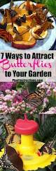 7 ways to attract butterflies to your yard butterfly plants and