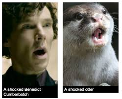 Cumberbatch Otter Meme - so we all know that benedict cumberbatch sherlock is an otter