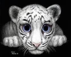 white tiger keane gallery