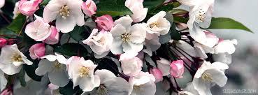 Nice Flowers Flowers Facebook Cover
