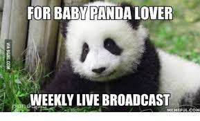 Panda Meme - for baby panda lover weekly live broadcast memeful com baby