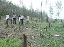 9 100 trees cut in 2016 17 is highest in 4 years most for infra