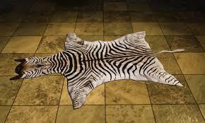 Genuine Zebra Rug Dcuo Furniture Zebra Rug