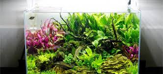 aquarium design exle planted tank lucid summer dream by hiep hong aquarium design