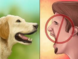 3 ways to stop your dog from barking at the phone wikihow