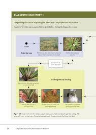 Plant Diseases Identification - plant disease