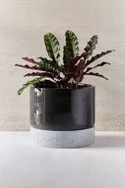 Indoor Modern Planters 54 Best Modern Planters Images On Pinterest Modern Planters