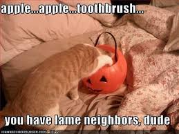 Halloween Cat Meme - the eco cat lady speaks to halloween or not to halloween
