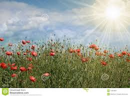 the flowers of summer at summer field with flowers and sun stock image image of looking