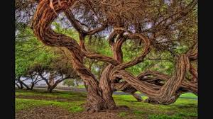 amazing the most beautiful trees in the world